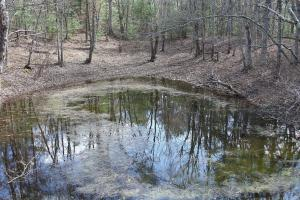 Vernal pond in forest setting.